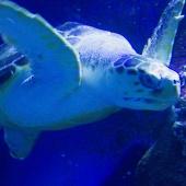 Nage avec les tortues - Le Monde de la Mer