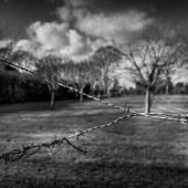 Confinement 8 - Série Photographique