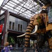 La sortie de l'Eléphant Géant - Portfolio J'ai rétréci le photographe